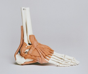 Podiatrist Foot Injuries Sunshine Coast